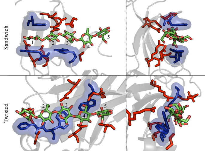 Cellulose-specific Type B carbohydrate binding modules