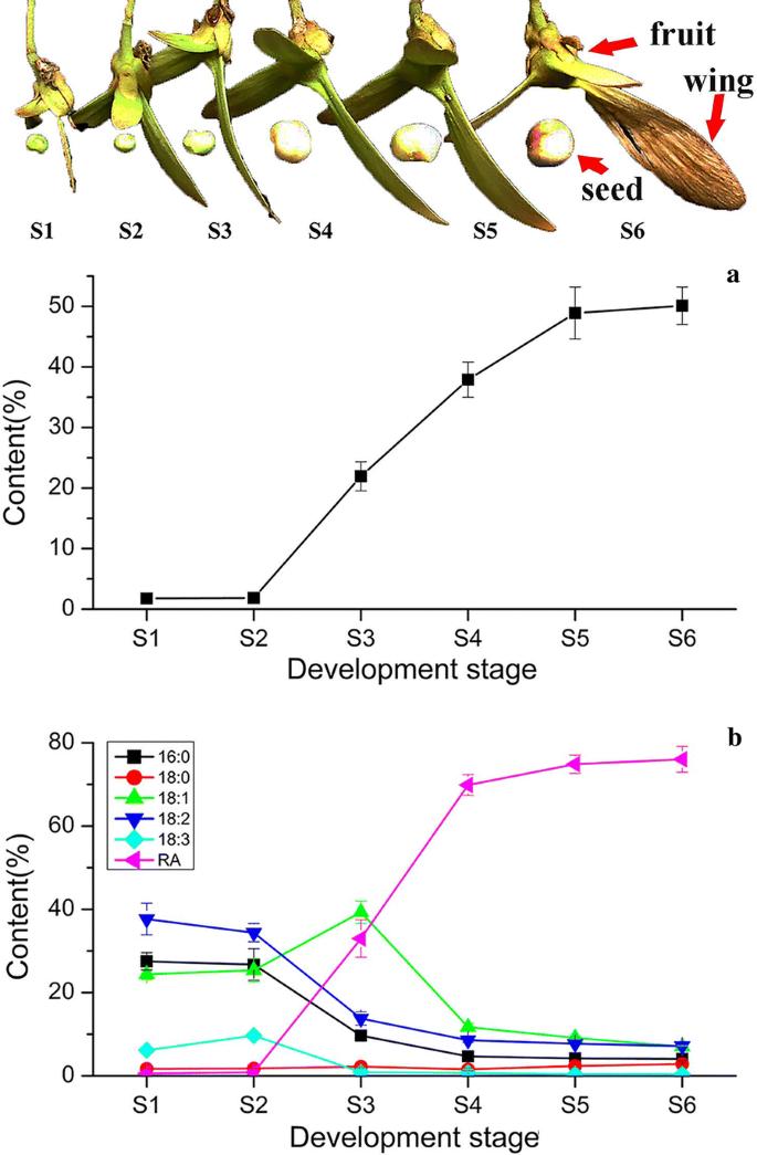 Identification of genes associated with ricinoleic acid accumulation