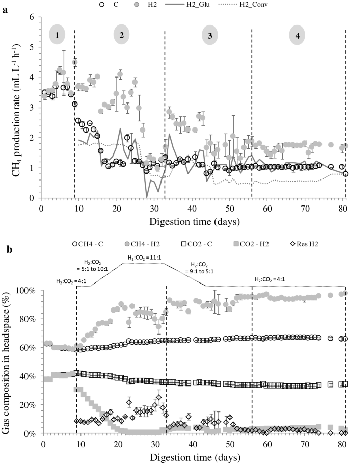 Effects of H 2 :CO 2 ratio and H 2 supply fluctuation on