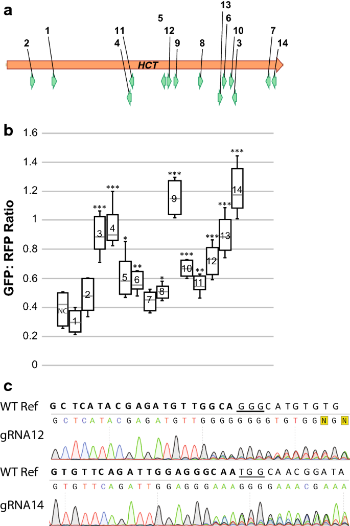A screening method to identify efficient sgRNAs in Arabidopsis, used