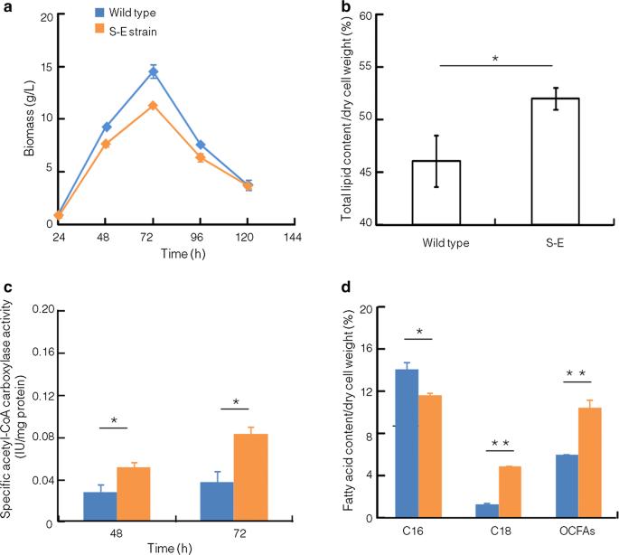 Metabolic engineering to enhance biosynthesis of both