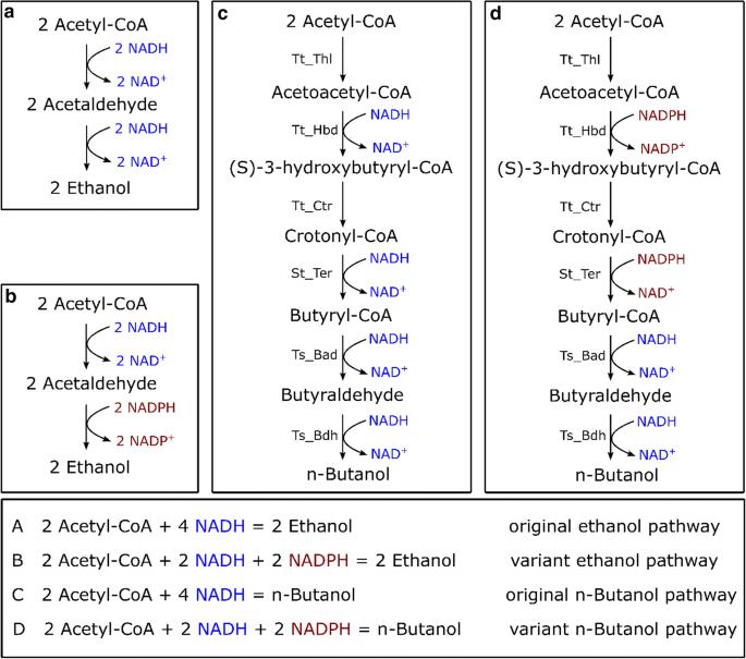 Metabolic engineering of Clostridium thermocellum for n -butanol