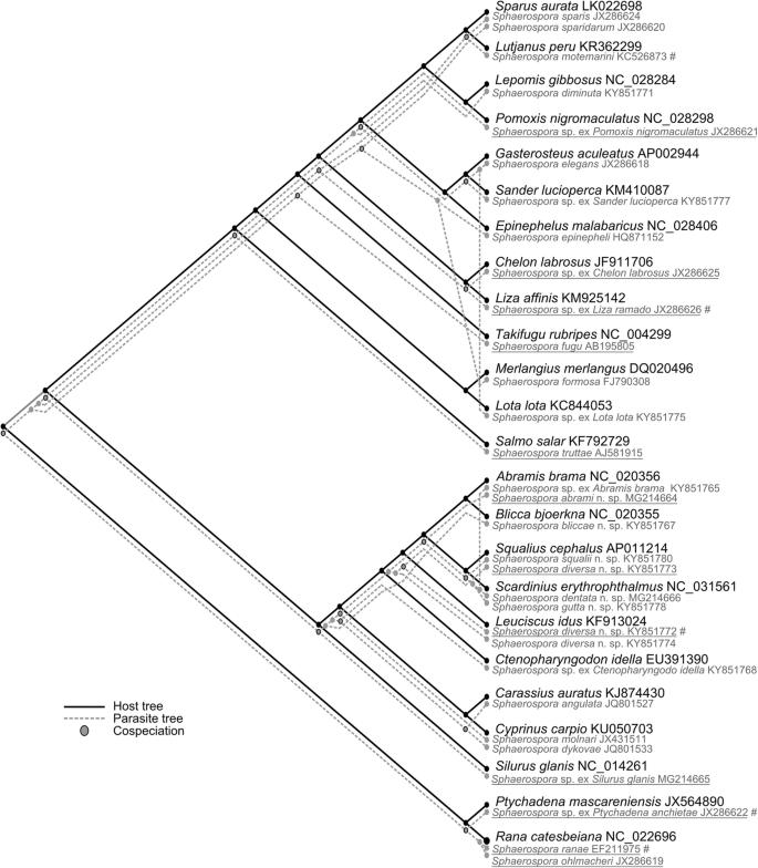 Biodiversity and host-parasite cophylogeny of Sphaerospora