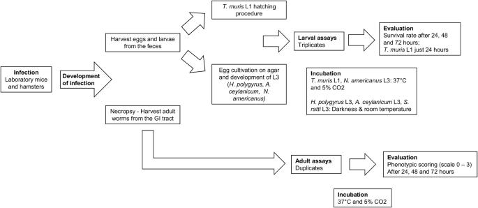 Evaluation of emodepside in laboratory models of human