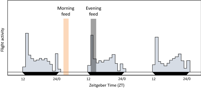 Time-of-day of blood-feeding: effects on mosquito life history and