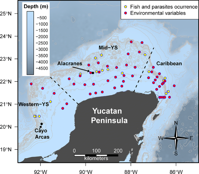 Metazoan parasite infracommunities of the dusky flounder