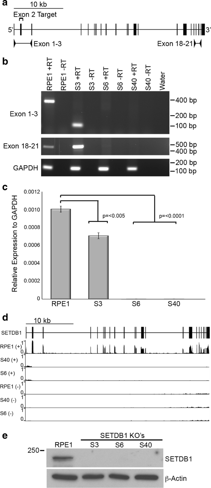 Loss of SETDB1 decompacts the inactive X chromosome in part