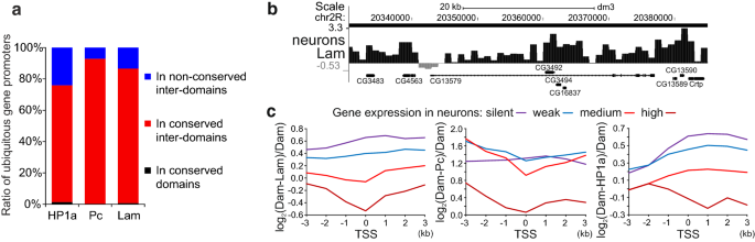 The large fraction of heterochromatin in Drosophila neurons is bound