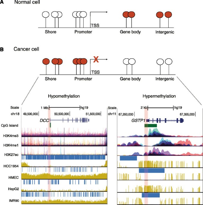 Pan-cancer patterns of DNA methylation | Genome Medicine