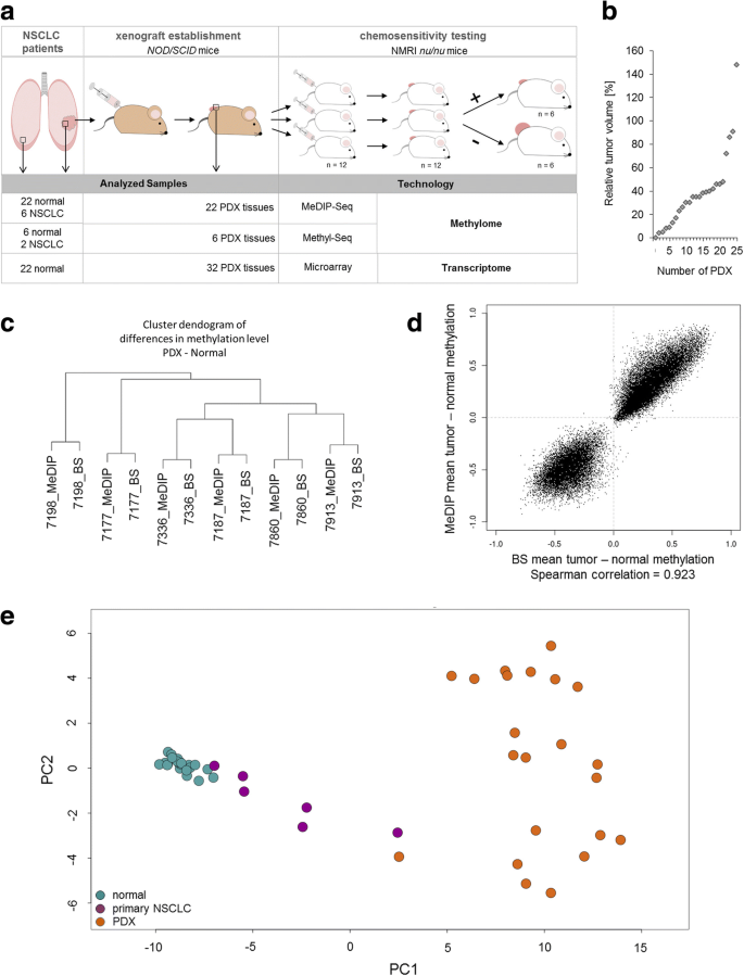Epigenomic profiling of non-small cell lung cancer
