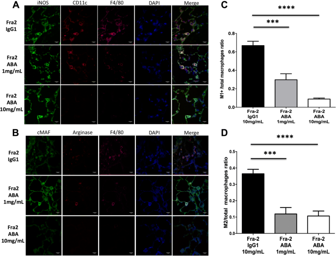 T-cell costimulation blockade is effective in experimental digestive
