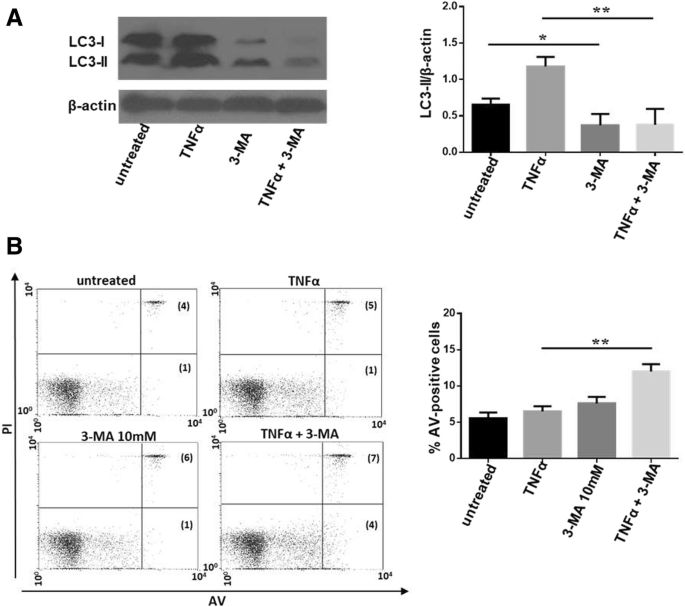 Reduction of autophagy and increase in apoptosis correlates