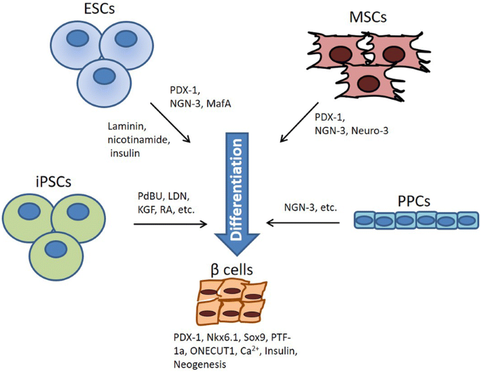 Stem cells as a potential therapy for diabetes mellitus: a