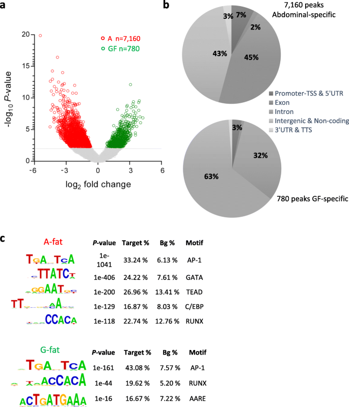 Differential open chromatin profile and transcriptomic