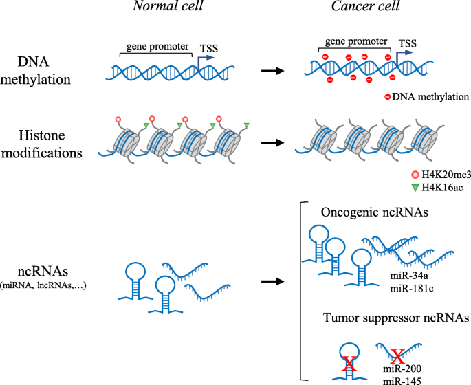Epigenetics in cancer therapy and nanomedicine   Clinical