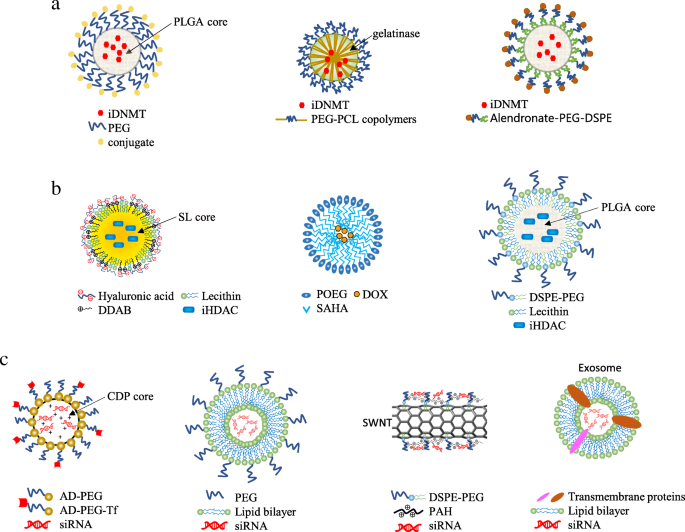 Epigenetics in cancer therapy and nanomedicine | Clinical