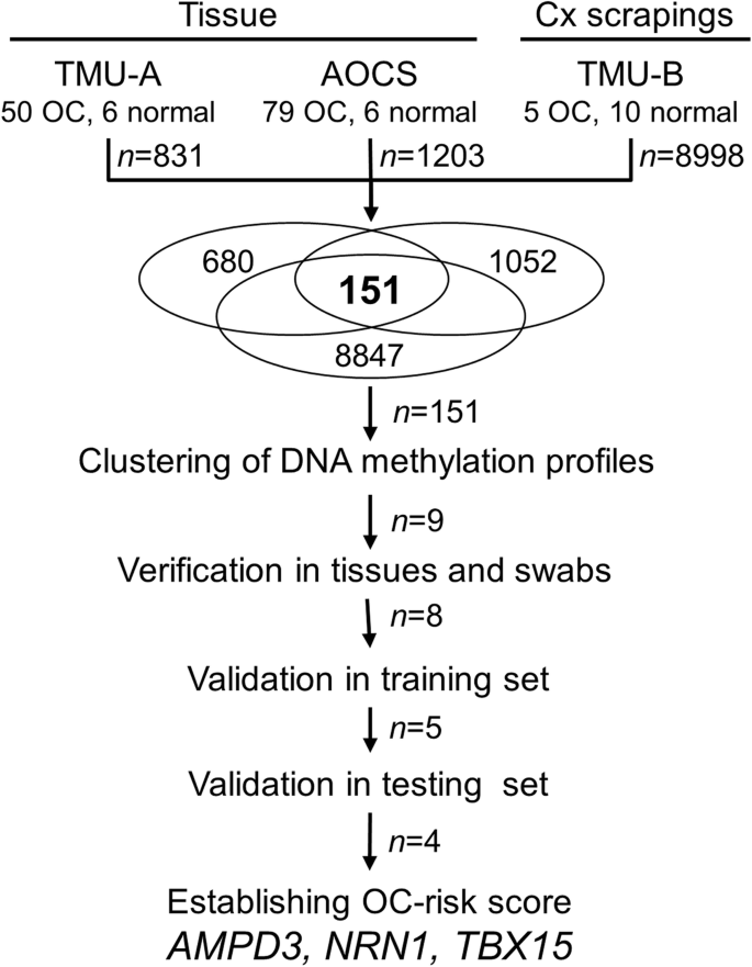 Ovarian Cancer Detection By Dna Methylation In Cervical Scrapings Clinical Epigenetics Full Text
