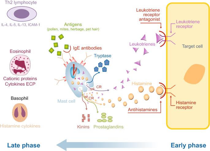 The complex pathophysiology of allergic rhinitis: scientific