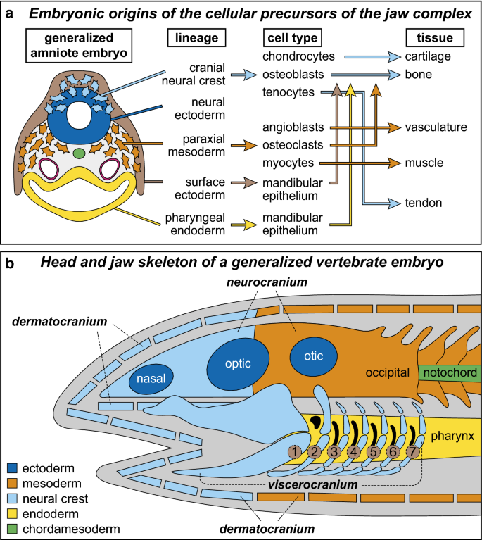 Molecular and cellular mechanisms underlying the evolution