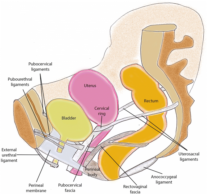 Dynamic Magnetic Resonance Imaging Of The Female Pelvic Floor A