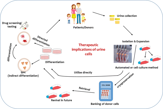 Urine-derived cells for human cell therapy | Stem Cell