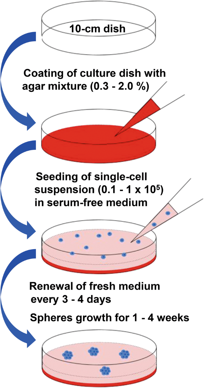 Development of a novel and economical agar-based non-adherent three