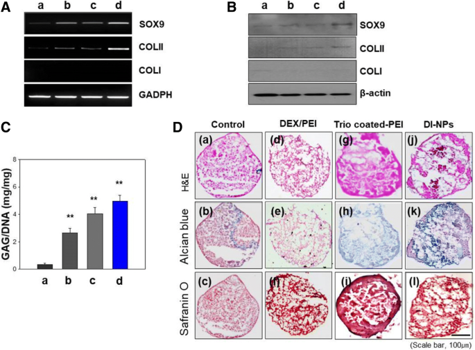 Gene expression profiling of chondrogenic differentiation by
