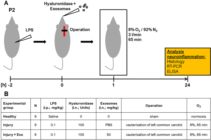 Exosomes derived from umbilical cord mesenchymal stem cells