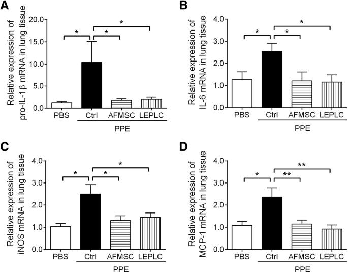 Predifferentiated amniotic fluid mesenchymal stem cells enhance lung