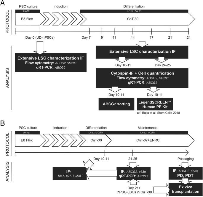 Modulation of Wnt/BMP pathways during corneal
