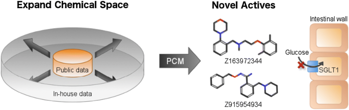 Identification of novel small molecule inhibitors for solute