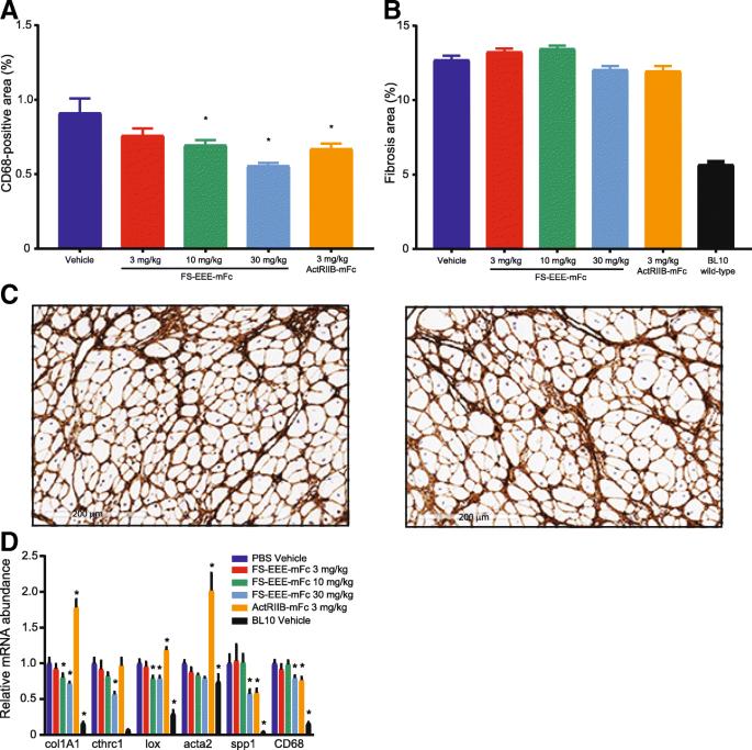Myostatin and activin blockade by engineered follistatin