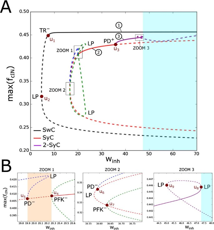 Bifurcations of Limit Cycles in a Reduced Model of the