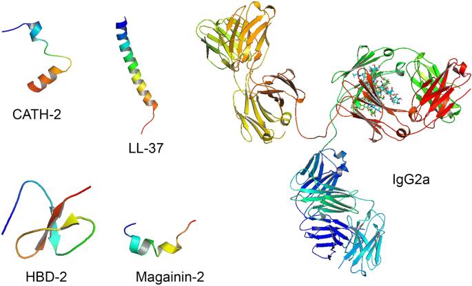 The potential for immunoglobulins and host defense peptides (HDPs