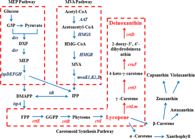 Analysis and expression of the carotenoid biosynthesis genes from