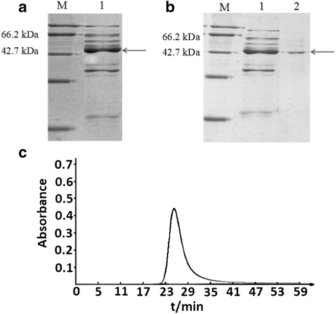 Molecular cloning, expression and adhesion analysis of silent slpB
