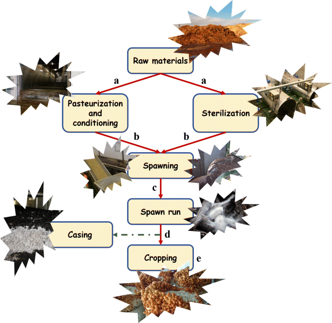 Supplementation in mushroom crops and its impact on yield and