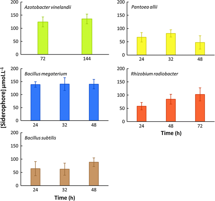 Comparison of five bacterial strains producing siderophores