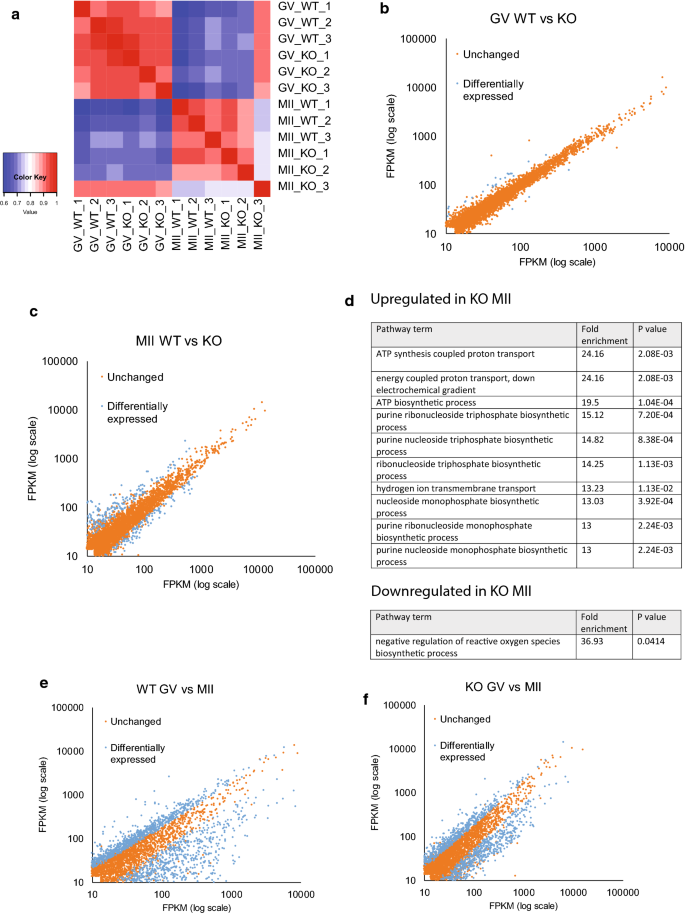 A role of Pumilio 1 in mammalian oocyte maturation and