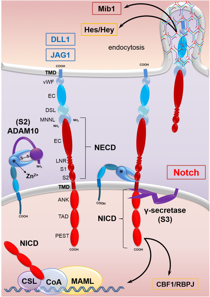 Signaling Pathways Involved In Colorectal Cancer Progression Cell Bioscience Full Text