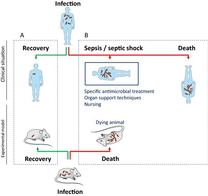 Preclinical septic shock research: why we need an animal ICU