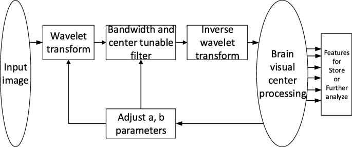 Video salient region detection model based on wavelet transform and