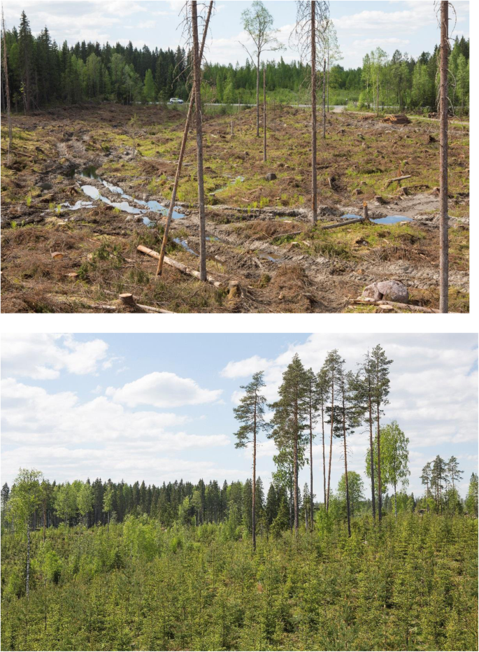 Conserving Forest Biodiversity A Comprehensive Multiscaled Approach