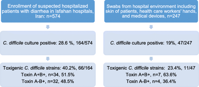 Molecular epidemiology of Clostridium difficile infection in