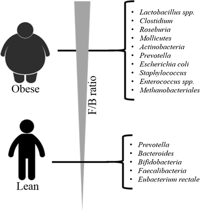 Effects Of Dietary Fibers And Prebiotics In Adiposity Regulation Via Modulation Of Gut Microbiota Applied Biological Chemistry Full Text