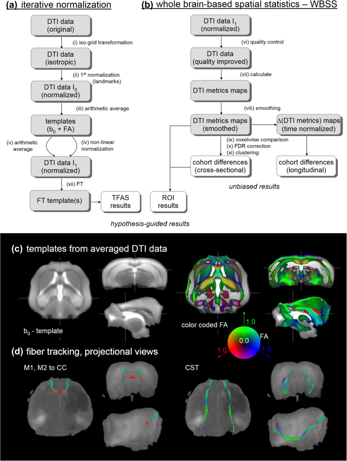Longitudinal diffusion tensor magnetic resonance imaging