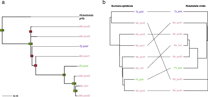 Multi-scale characterization of symbiont diversity in the