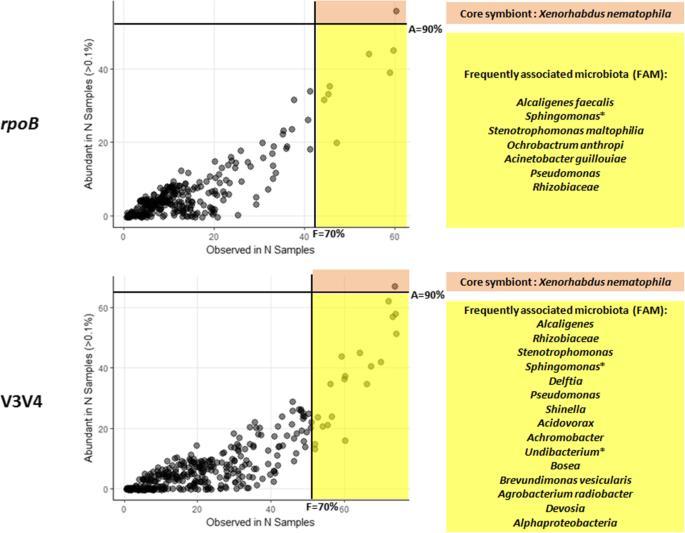 Entomopathogenic nematode-associated microbiota: from monoxenic ...