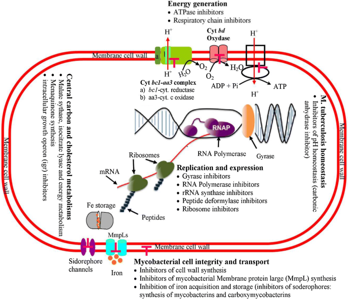 Application of metabolomics to drug discovery and