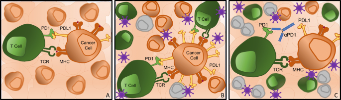 Oncolytic viruses and checkpoint inhibitors: combination